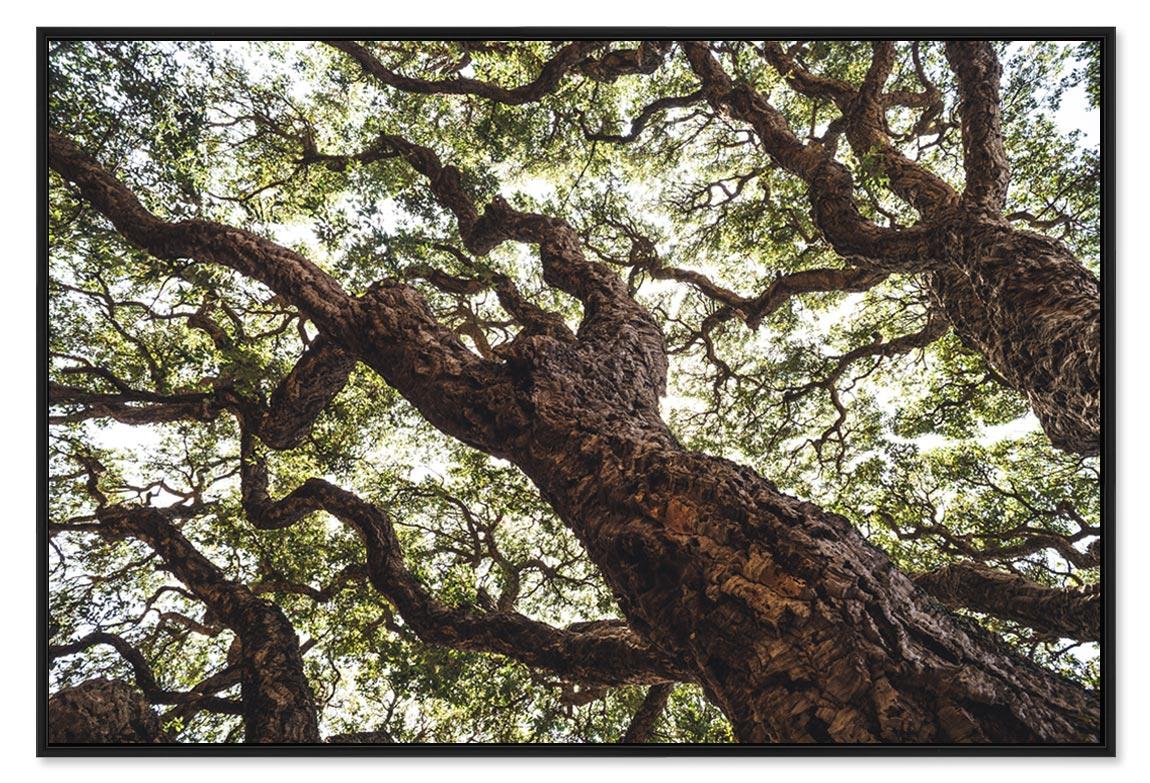 Galerie photos de nature, tirages d'art