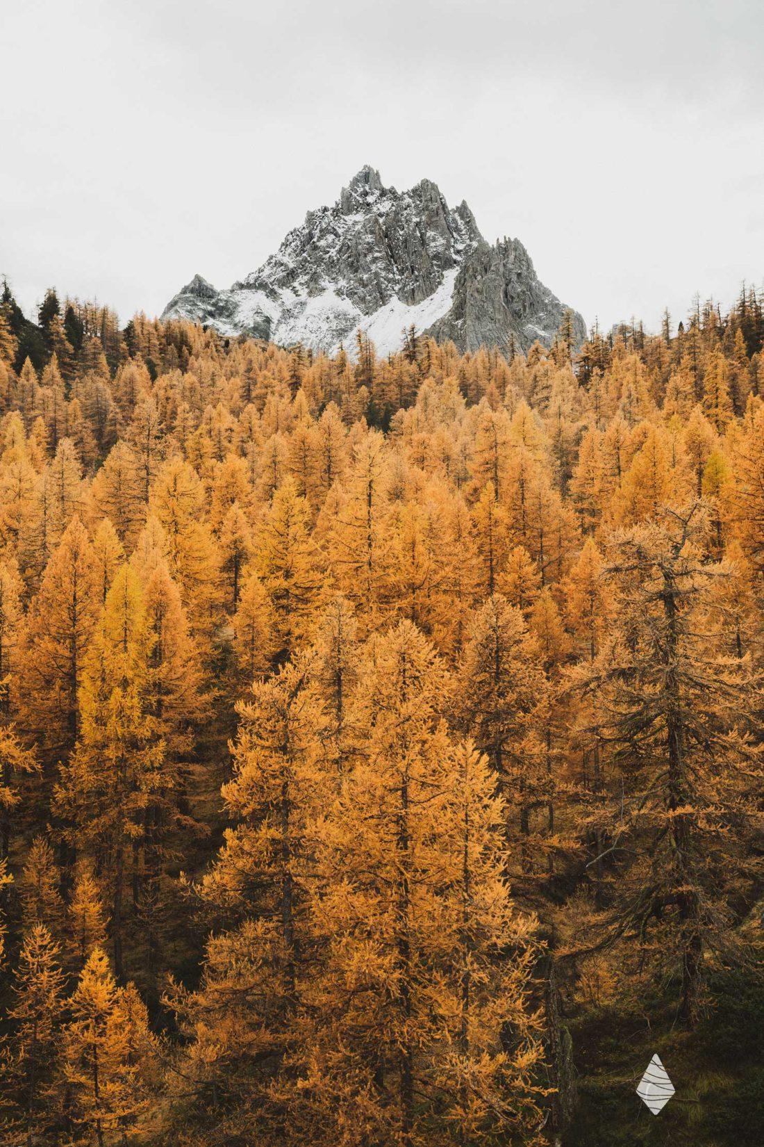Photo d'une foret de mélèze en automne avec une montagne enneigée dans la vallée de la Clarée