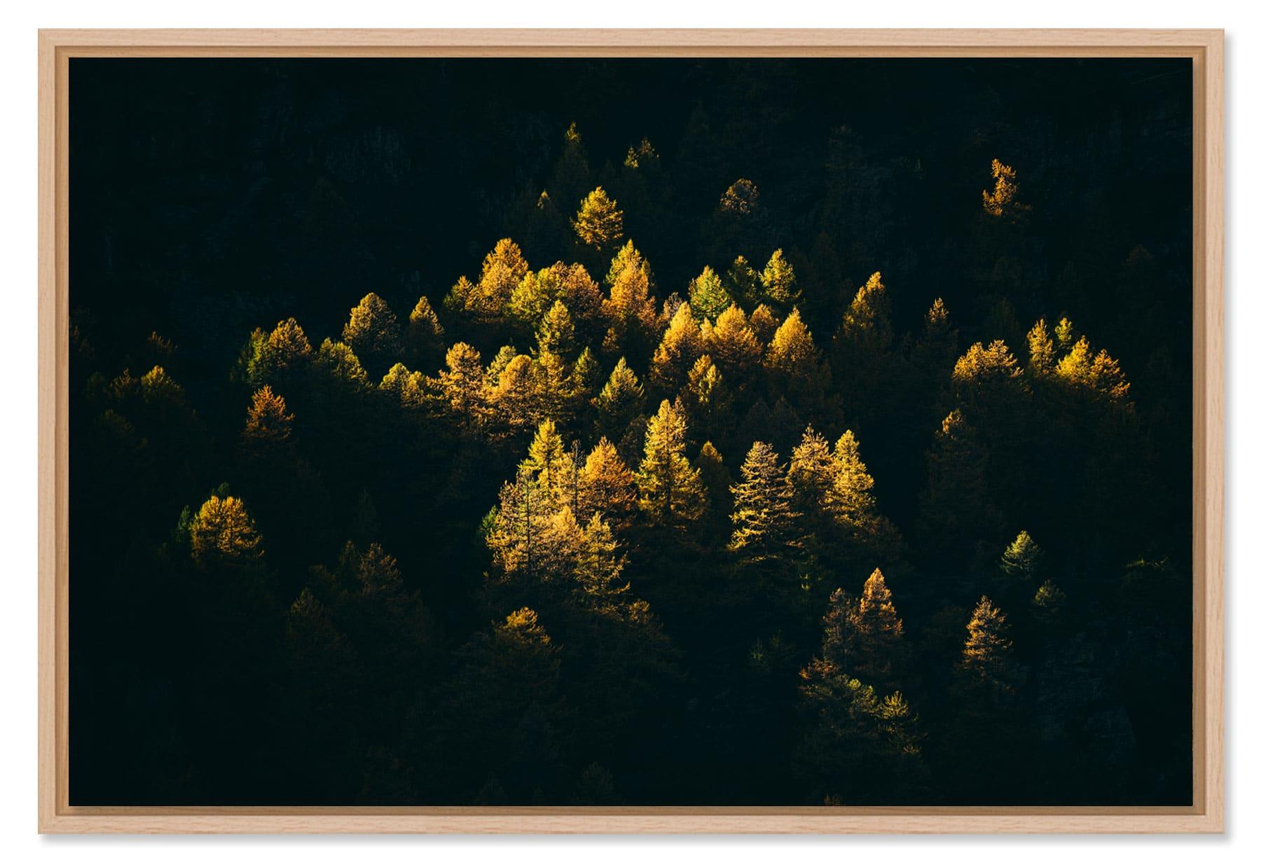 Tirage photo Paysages Arbres et Végétaux.