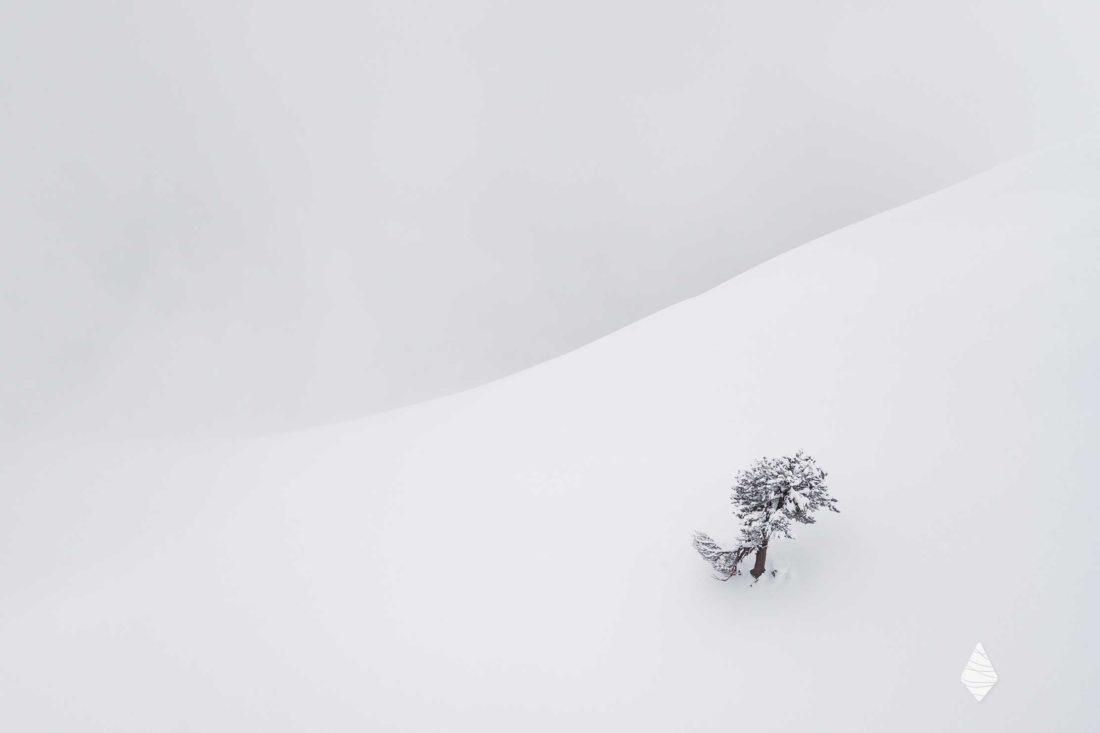 Photo d'un arbre enneigé seul dans la montagne