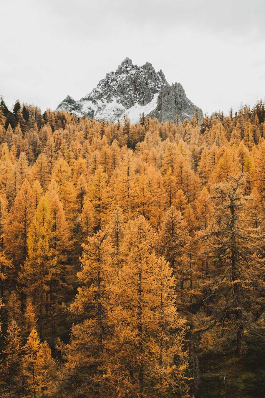 Photo de mélèzes en automne